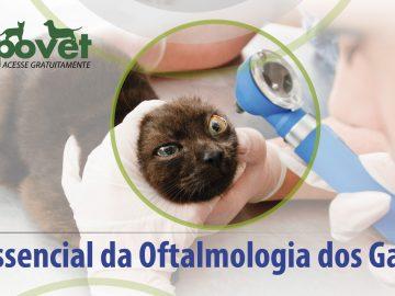 PapoVet Oftalmologia