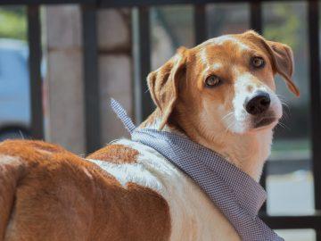 Protetor solar em cães